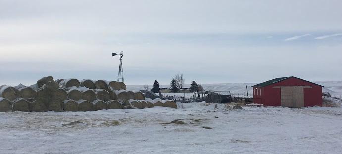 winter farm yard